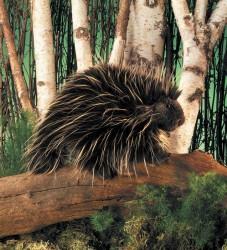 Folkmanis Porcupine-20