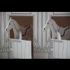 THALIE ET ORPHEE la petite ecurie/ Pony camp-01
