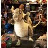 Folkmanis hånddukke Pack Rat-01