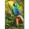 Folkmanis Green Macaw papegøje-02