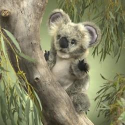 Folkmanis Koala-20